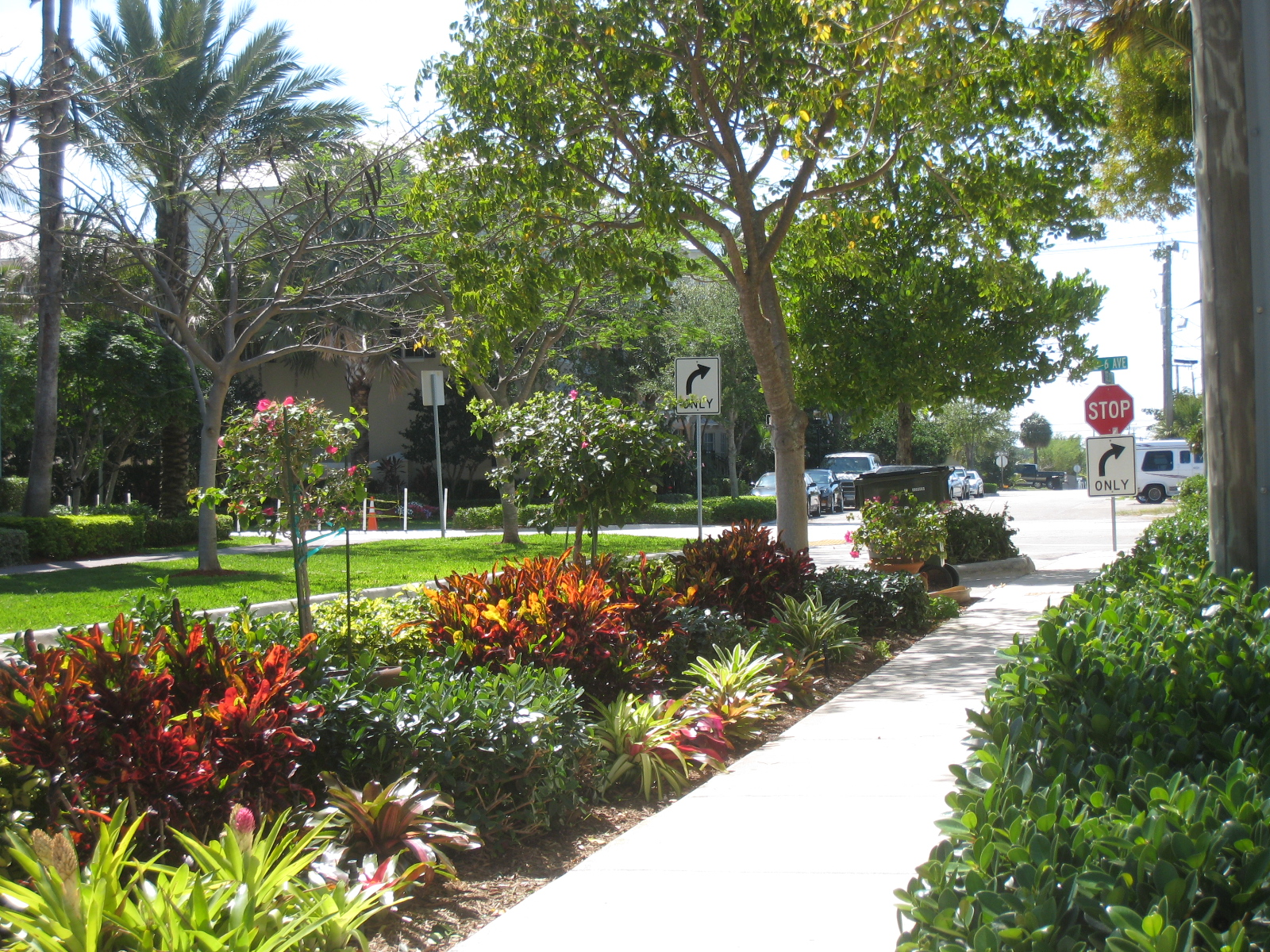 Florida friendly landscaping ifas palm beach extension for Landscaping plants