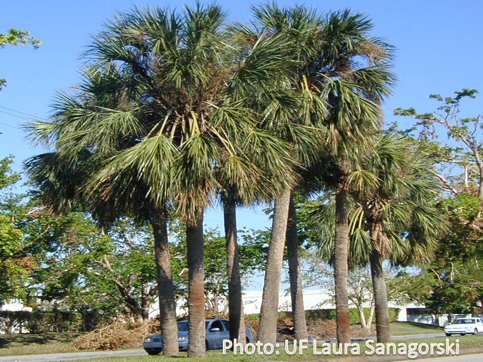 University Of Florida Palm Beach County Extension